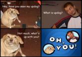 6O163's DOG