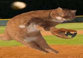 Dodge Cat