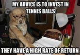 Financial Advice Dog