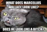 Samuel L. Jackson Cat