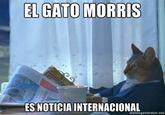 El CandiGato Morris (Morris the Cat-idate)