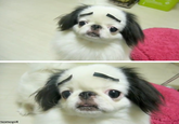 Dogs with Eyebrows