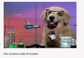 The Science Side of Tumblr
