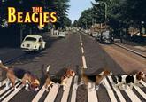 #DogBands