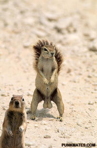 Crasher Squirrel