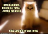 Funny-pictures-the-creation-story-of-lolcats
