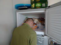 241543903 / Heads In Freezers