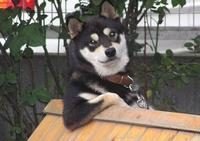 20533_cooldog.jpg