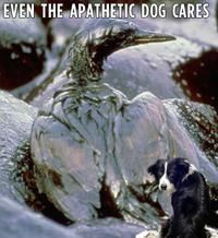 Apathetic Dog