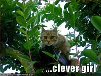 Clevergirl128526744970468750