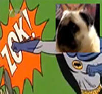 Pug says Batman!