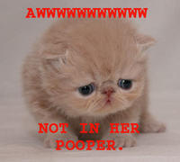 Stick it in her Pooper