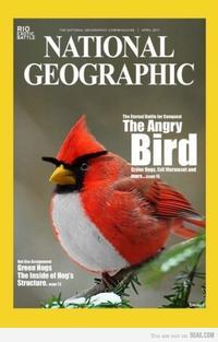 national-geographic-angry-bird-84993-460-720.jpg