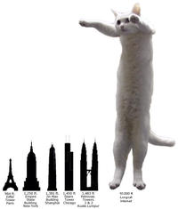 Longcat