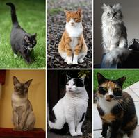 Collage_of_six_cats-02