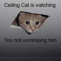 Worshipceilingcat