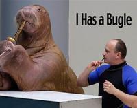 walrus-bugle-lg.jpg