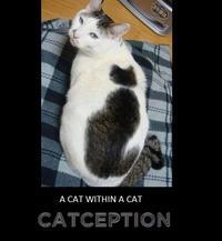 Catception