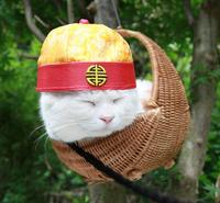 Shironeko / Basket Cat