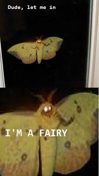 Dude! Let me in! I'm a fairy!