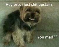 My Faggot Dog