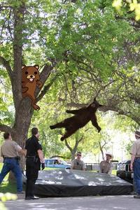 Falling Bear