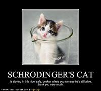 Schrodinger's Cat: Image Gallery (Sorted by Low Score) | Know Your ...