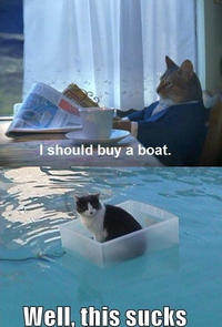 I Should Buy a Boat Cat