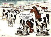 2013 Horse Meat Scandal