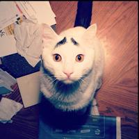 Eyebrow Cat
