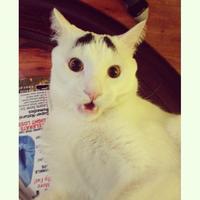 Eyebrow Cat