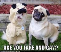 """""""Fake And Gay"""""""