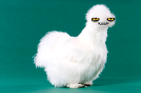 Peyton's Fluffy Chicken