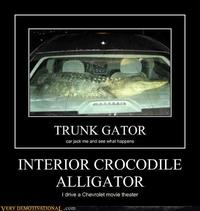 Interior Crocodile Alligator