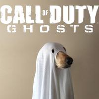 Call of Duty Dog