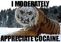 Cocaine Bear