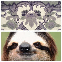 Sloths