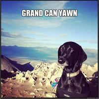 Unimpressed Dog