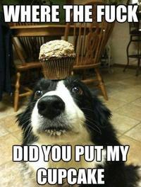 Cupcake Dog