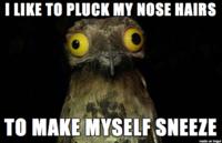 Weird Stuff I Do Potoo