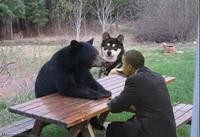 Patient Bear