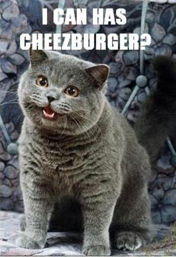 lol_cat_icanhascheezburger.jpg