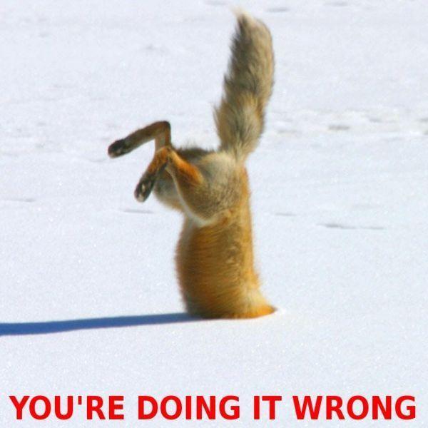 fox-doing-it-wrong.jpg