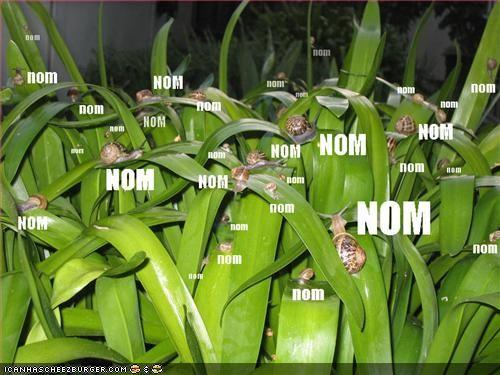 funny-pictures-nom-snails.jpg