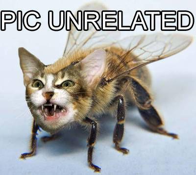 catbee.jpg