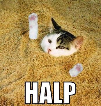 cat-halp-1.jpg