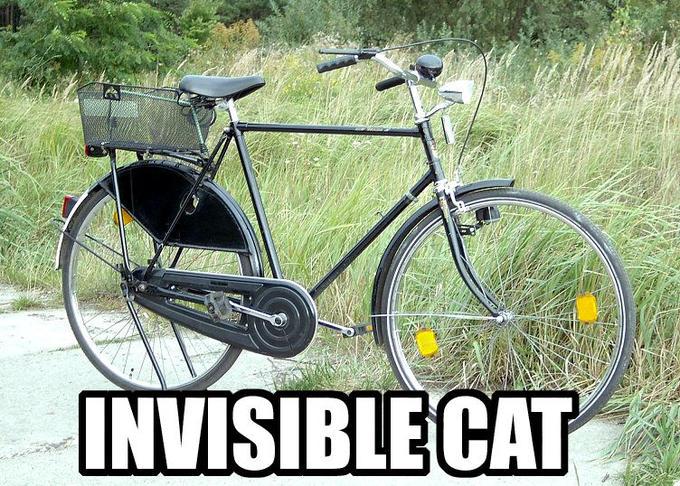 cat-invisible-cat.jpg