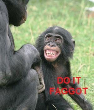 Do_it_monkeys.jpg