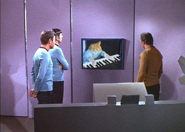 Keyboardcat3.jpg