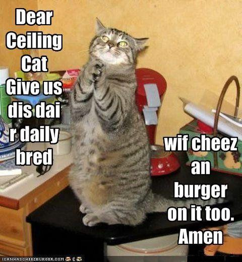funny-pictures-cat-prays-for-bread-with-cheese-and-burger.jpg